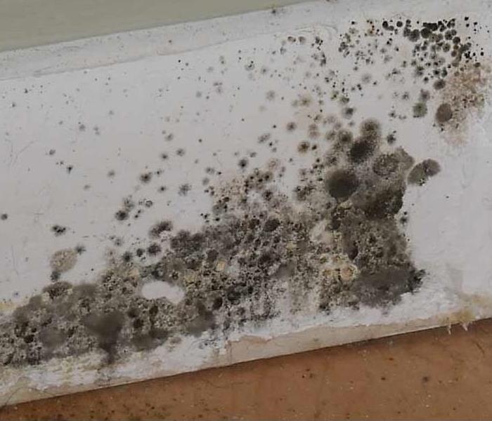 Dallas, TX Mold Remediation  Before