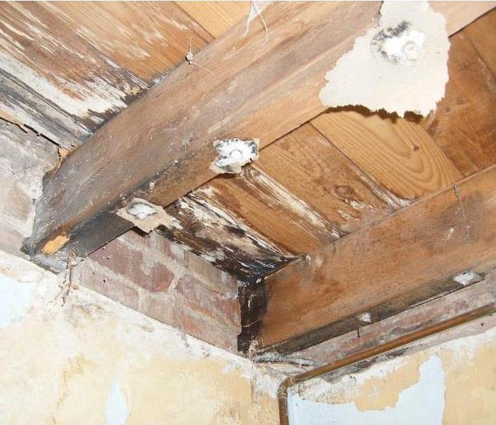 Mold Remediation Can You Spot Signs of Mold