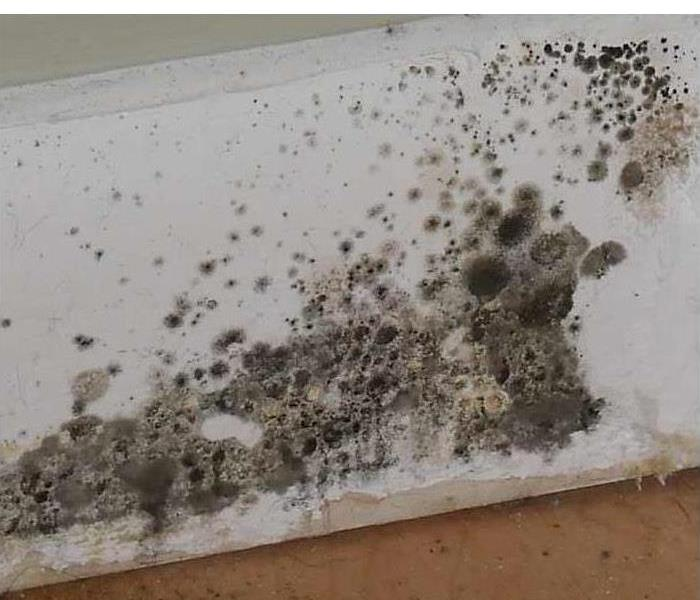 Mold on a baseboard
