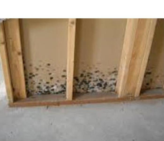 Mold Remediation Microbial growth inside and outside your home