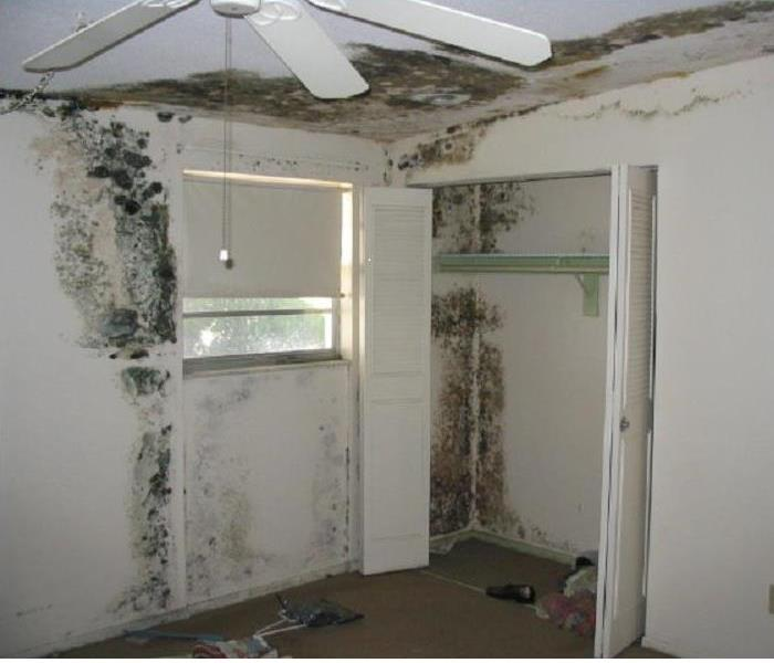 Mold Remediation What is a mold remediation?