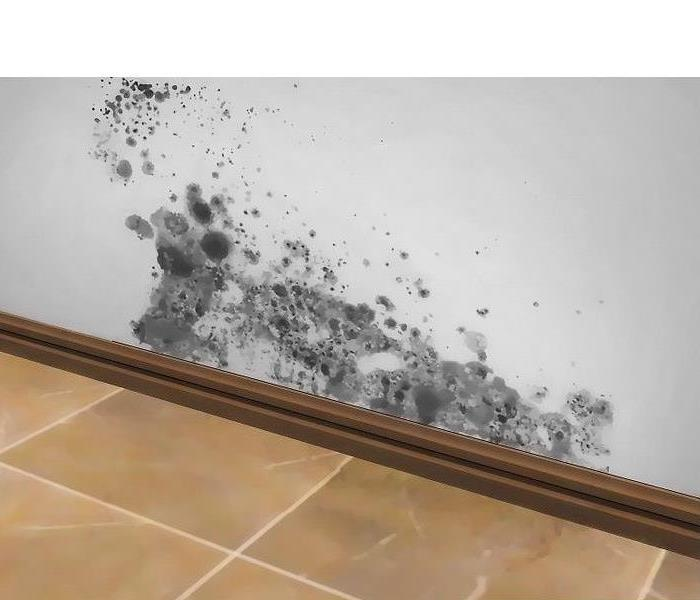 Mold Remediation Understanding How Mold Grows and Spreads in Your Home