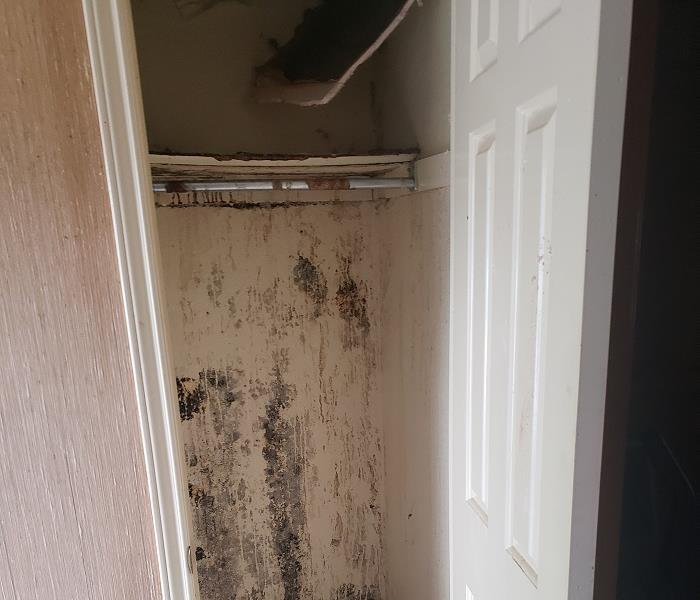 Mold growth in a closet